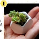 DIY Mini Succulent Gardens